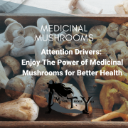Medicinal Mushroms Mother Trucker Yoga Blog Post